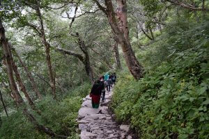 Utttarakhand Trip Trek:  dence-forest-near-valley-of-flower