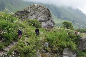 Utttarakhand Trip Trek:  bloom-of-flower-in-valley-of-flower-trek-uttarakhand