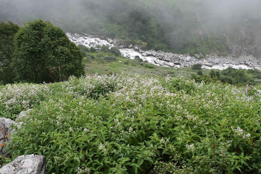 inside view of valley of flowers