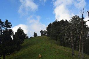 Utttarakhand Trip Trek:  beautiful view on nag tibba trek
