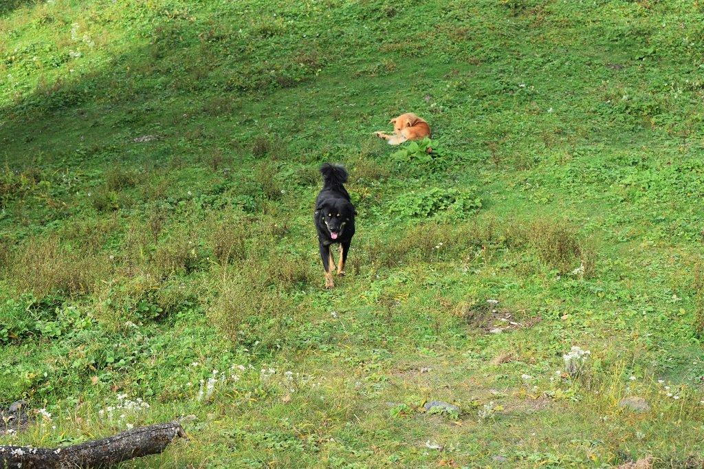 dogs on nag tibba trek