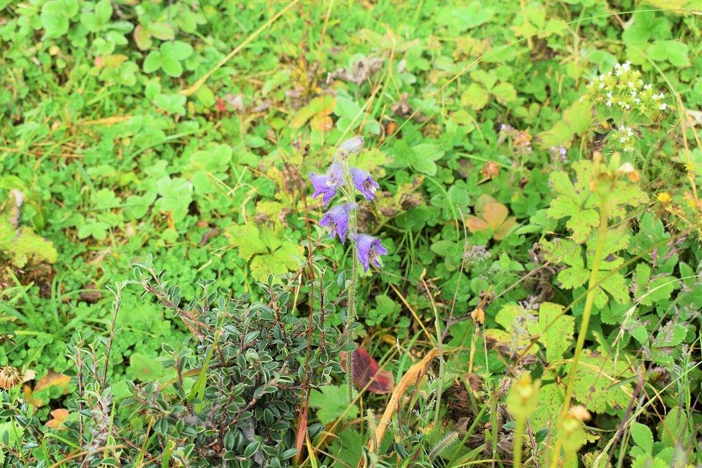 flowers on nag tibba trek