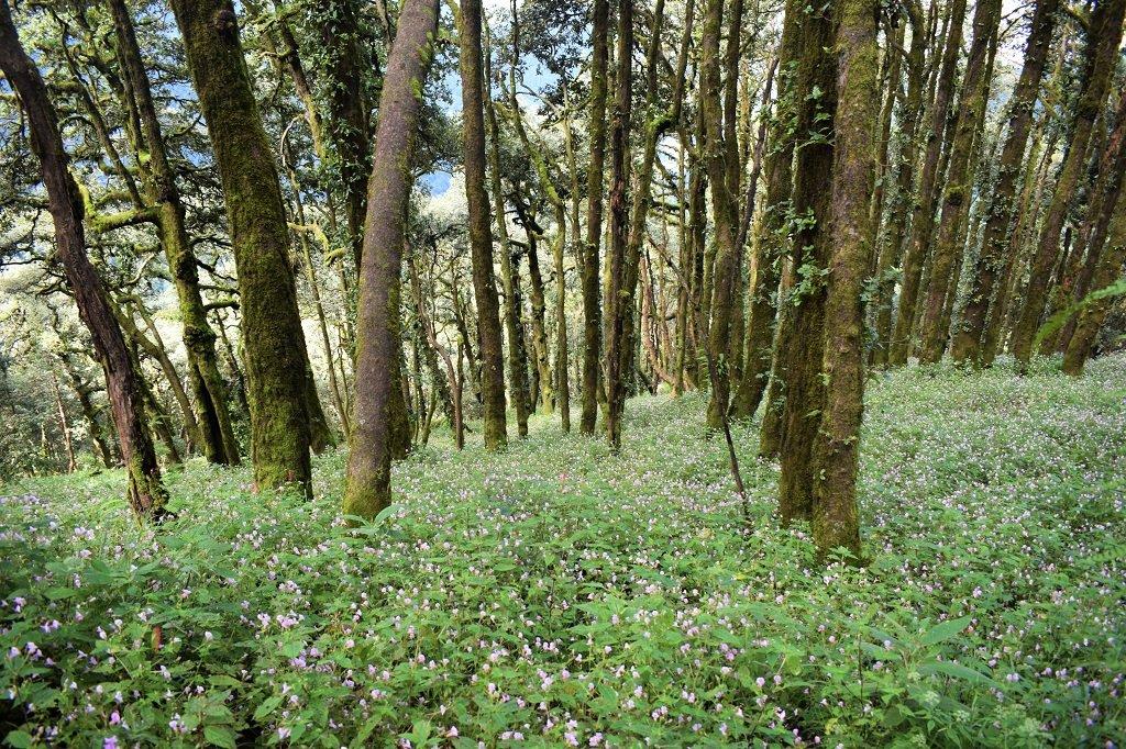 flowers & trees on nag tibba trek