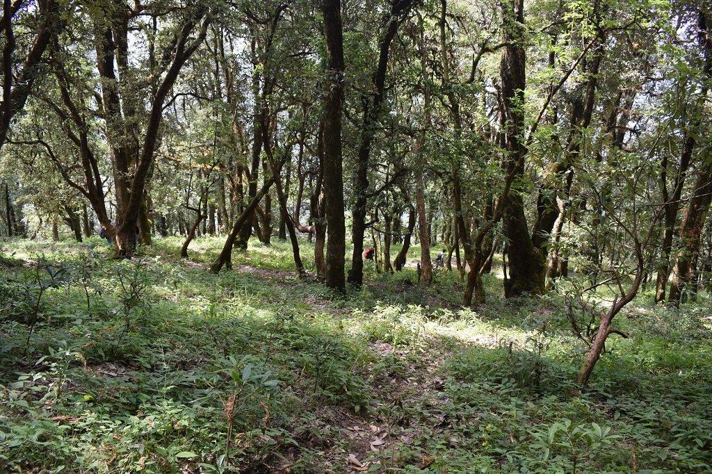 forest area on nag tibba trek