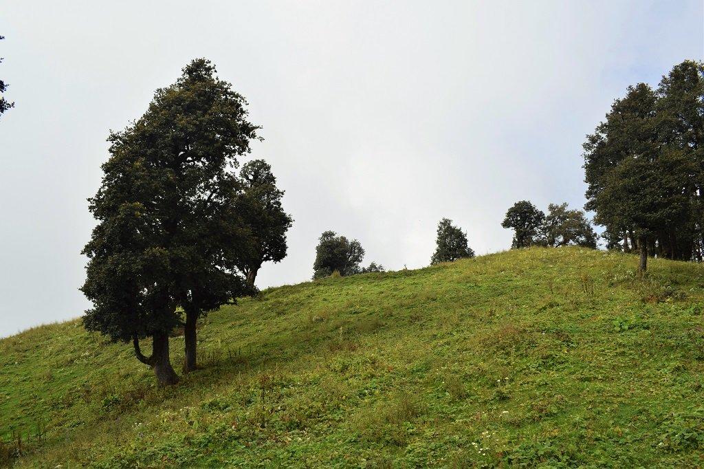 green carpet on nag tibba trek
