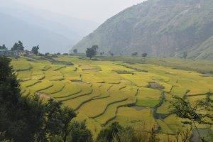Utttarakhand Trip Trek:  green field on nag tibba trek