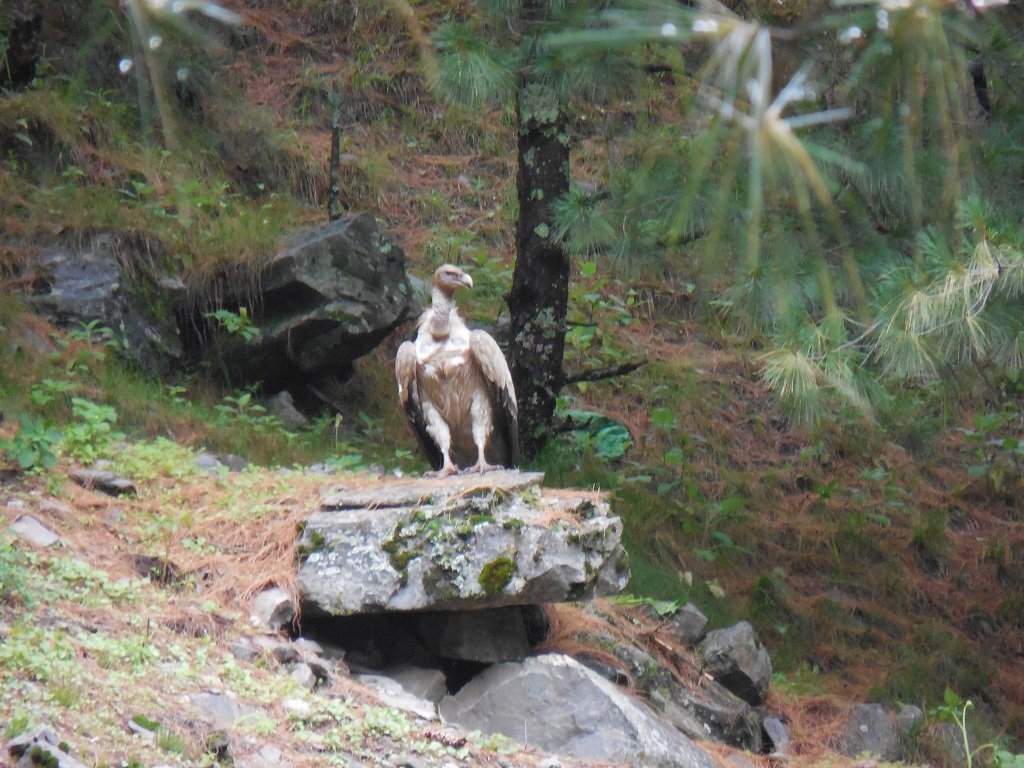 beautiful bird on rupin pass trek