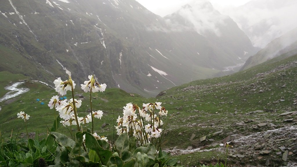 flowers on rupin pass trek