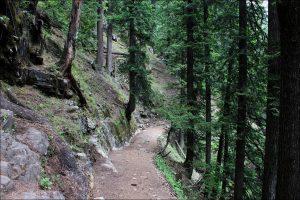 Utttarakhand Trip Trek:  Lush forest enroute of rupin pass trek