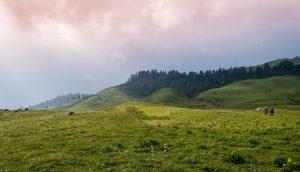 Utttarakhand Trip Trek:  Dayara Bugyal Uttarakhand