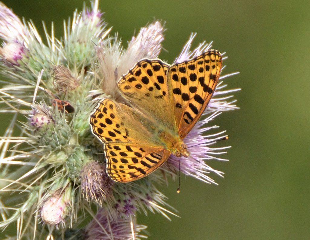 Butterfly in Binsar Binsar Wildlife Sanctuary
