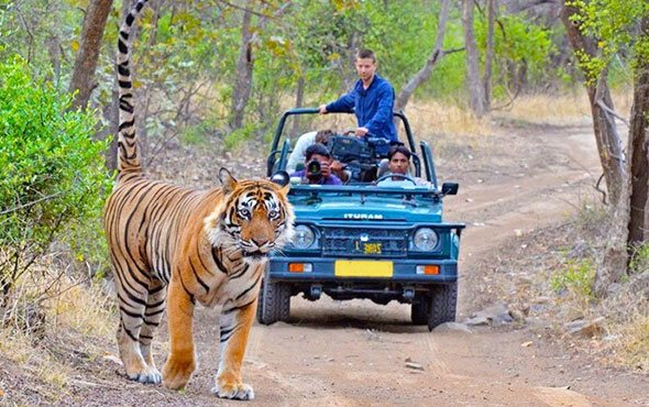 Jim corbett wild tour