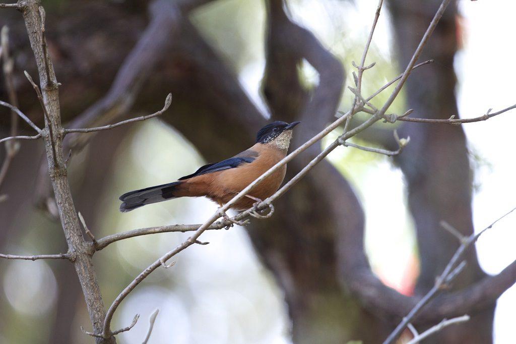 Binsar Wildlife Sanctuary