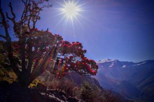 Utttarakhand Trip Trek:  flowers view on chopta camping